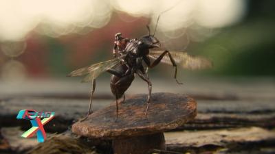 Aiouuuuuuu, Anthony!!! (Sim, a formiga tem nome!)