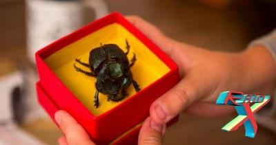 O Escaravelho do Diabo é um filme difícil pra diabo de sair do papel!