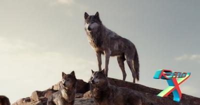 A força do alcateia é o lobo e a força do lobo é a alcateia.