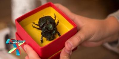 Aviso fatal: vítimas recebem um escaravelho pelo correio